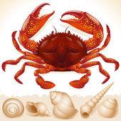 Caranguejo vermelho — Vetorial Stock