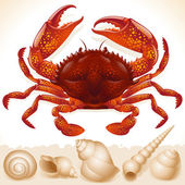 Red crab — Stock Vector