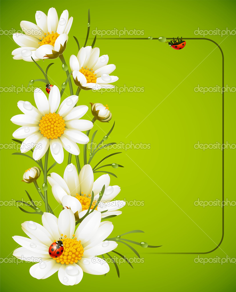 Camomile frame  Stock Vector #4102357