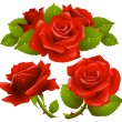 Stock vektor: Red roses set