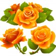 Stock Vector: Orange roses set