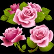 Pink roses set - Stock Vector
