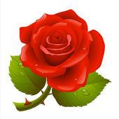 Rosa roja — Vector de stock