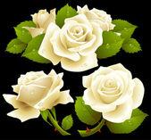 White roses set — Stock Vector