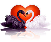 Two graceful swans in love — Stock Vector