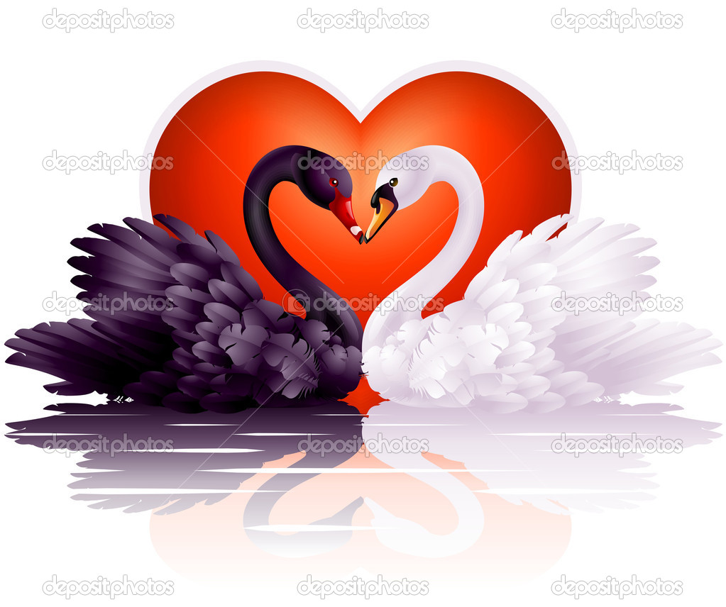 ===Quier,pero no...=== Depositphotos_4209193-stock-illustration-two-graceful-swans-in-love