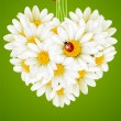Floral love card (camomile heart) — Vecteur