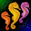 Vector Seahorses — Stock Vector