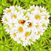 çiçek aşk kartı — Stok Vektör