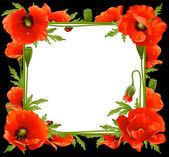 Poppy Floral Frame — Stock Vector