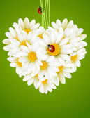 Floral love card (camomile heart) — Stockvector
