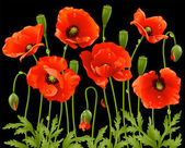 Spring flowers: poppy — Vector de stock