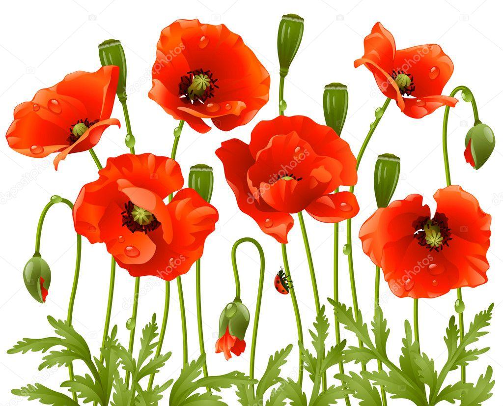 Spring flowers: poppy — Stock Vector © d-e-n-i-s #4211612: depositphotos.com/4211612/stock-illustration-spring-flowers-poppy.html