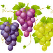 Three cluster of grapes — Stock Vector