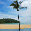 Palm tree at the beach and swimming pool, Phuket, Thailand — Stock Photo