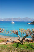Luxury yacht, turquoise Aegean Sea and cut trees, Crete, Greece — Stock Photo
