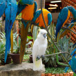 White parrot in Nong Nooch tropical garden, Pattaya, Thailand — Stock Photo