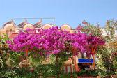 Decorazione con fiori della turchia vacanza villa, antalya — Foto Stock