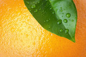 Orange and leaf — Stock Photo