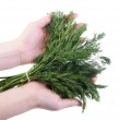 Bunch of dill in a hand isolated on the white background — Stock Photo #4668659