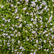 Small flowers and green grass — Stock Photo