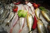 Frischer fisch — Stockfoto