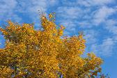 Autumn gold foliage — Stock Photo