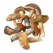 Mushroom crop — Stock Photo