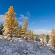Sunny winter landscape — Stock Photo