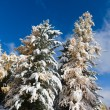 Winter trees — Stock Photo #4048027