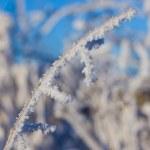 Winter grass — Stock Photo