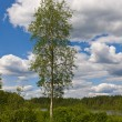 Lonely aspen — Stock Photo #4168938