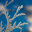 Stock Photo: Hoarfrost