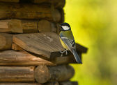 Titmouse on a wooden small house — Stock Photo