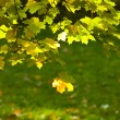 Green and yellow - 