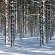 Winter forest — Lizenzfreies Foto