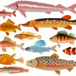 Set of fishes — Stock Vector