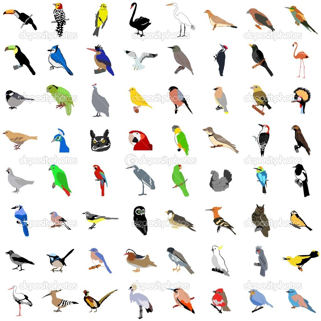 Big vector collection of birds  Stock Vector #5022484