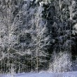Winter forest in frost and sunshain — Stock Photo