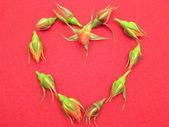 Botões de rosa organizados como coração em feltro vermelho — Fotografia Stock
