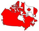 Coyote Canada — Stock fotografie