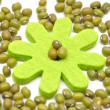Stock Photo: Sprouting mung bean