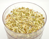 Jar with sprouting vegetable — Stock Photo