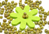 Sprouting mung bean — Stock Photo