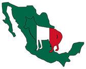 Coyote Mexico — Stock Photo