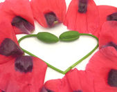 Heart out of poppy buds with petals on white — Stock Photo