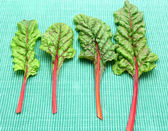 Four red stemmed chard on green background — Stock Photo