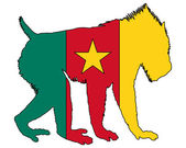 Mandrill Cameroon — Stock Photo