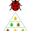 Ladybird diet pyramid — Stock Photo