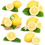 Set of ripe lemon fruits isolated — Stock Photo #4955427